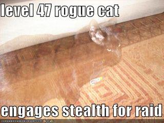 rogue cat