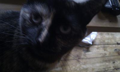Agatha stares