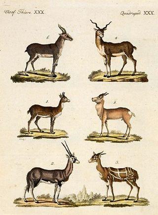 Antelopes_and_Gazelles_-_Bertuch