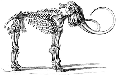 Woolly-mammoth-image-01